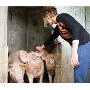 Piggies and Piglets