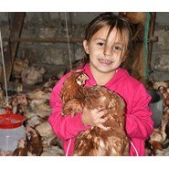 Chirpy chickens